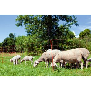Ako Filet à moutons Ovinet orange double pointe