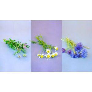 Prêt à pousser Recharge Trio Fleurs - Camomille Lavande Bleuet