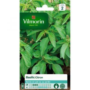 Vilmorin Basilic Citron - Sachet de graines