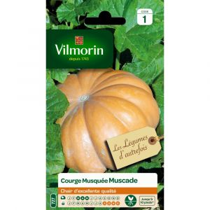 Vilmorin Courge musquée hiver 6 g