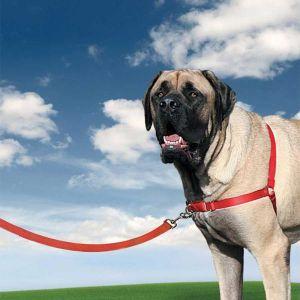 PetSafe Easy Walk Harnais CY3119 chien XL