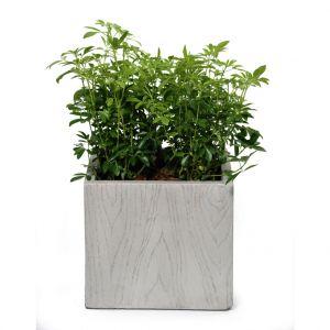 Pot carré haut moyen large LIA gris beige 34,68L