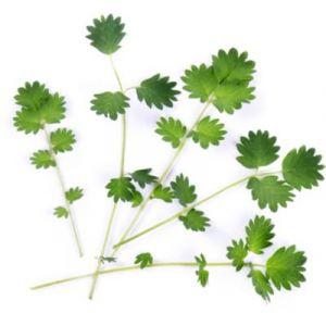 Veritable Capteur pour plantes LINGOT PIMPRENELLE