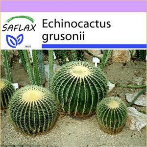 Saflax Coussin de belle-mère - 40 graines - Echinocactus grusonii