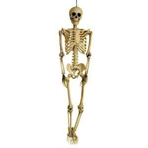 Squelette 3D réaliste à suspendre (90 cm)
