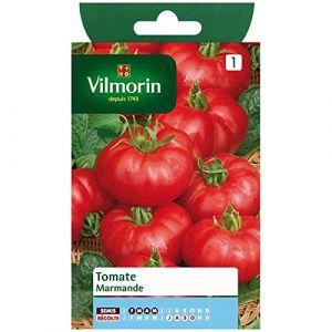 Vilmorin Tomate marmande 1.5 g