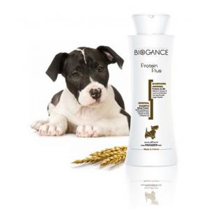 Biogance Protein Plus Shampooing pour chien