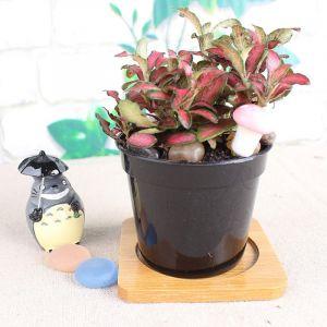 WeWoo Pot de fleur noir Pots à fleurs en plastique plus épais petit bassin pépinière spécial disque mini de