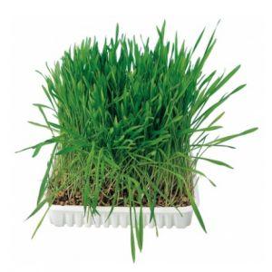 Trixie Sachet de semences herbe à chats