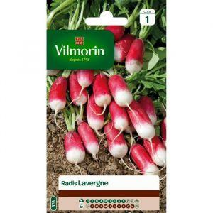 Vilmorin Radis Lavergne - Sachet de graines