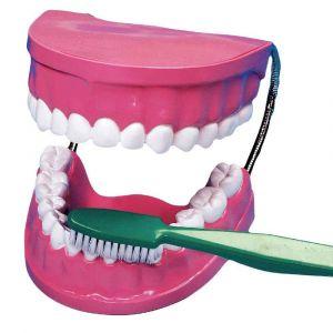 Vinco Educational La bouche - les dents + brosse à dents géante