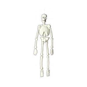 Squelette 3D