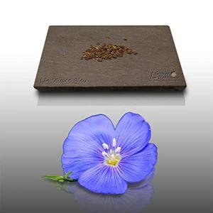 150 Graines Fleurs de Lin Vivace Bleu - Linum Perenne (LE GRENIER D'ABONDANCE, neuf)