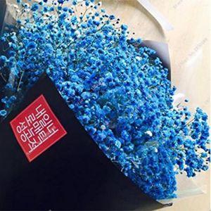 Ncient 30Pcs/Sac Graines de Gypsophile Adorable Fleur Parfumée Bonsaï en Plein Air Graines de Fleurs Jardin pour l'Intérieur et l'Extérieur (Bleu) (Ncient, neuf)