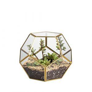 Jincao Terrarium en forme de dodécaèdre et plaques de verre pentagonales pour plante Transparent gold copper transparent (Mitienda Shop, neuf)