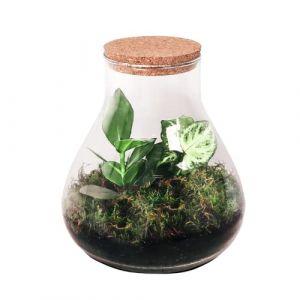 BOTANICLY | Plantes vertes d intérieur - DIY jardin de bouteille - Erlenmeyer Terrarium avec du liège moyen - mélange botanique | Hauteur: 23 cm (BOTANICLY, neuf)