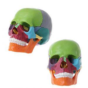 Adulte Humain Modèle Crâne Avec 15 Partie Colorée Version Amovible, 4D Puce Anatomie, Anatomie Médicale Anatomical Enseignement Squelette Tête D'enseignement Étudier Fournitures (Shijie's shop, neuf)