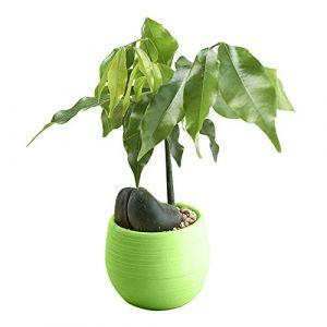 Fleur Pot de fleurs Pots Pot de fleurs Pot de fleurs Creative Pot de fleurs - forme ronde Plastique Intérieur ou extérieur Pots - bureau Home Decor Pots de fleurs - Vert, rouge, blanc, bleu, jaune (Serria, neuf)