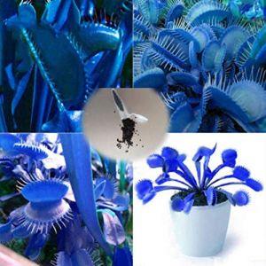 Sisaki Lot 10/30 graines de Dionée Attrape Mouche Plante Carnivore Insectes Mouches (Kaimus, neuf)
