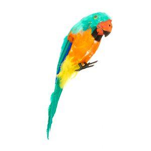 Perroquet vert des îles