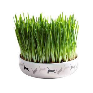 Ecuelle en céramique herbe à chat - Couleur Taille unique - Taille Blanc