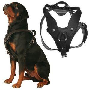 Harnais pour chien en cuir Scorpion avec poignée