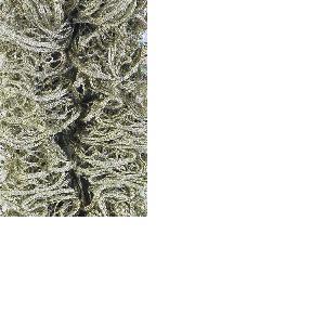Laine TONIA UNI, Schoeller, pelote de 100 g, 30 mètres, Coloris 05 / beige