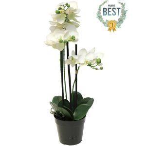 Orchidée Phalaenopsis artificielle en pot 3 hampes H 60 cm qualité décorateur Crème - couleur: Crème