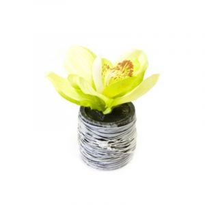 Orchidée Verte en Pot