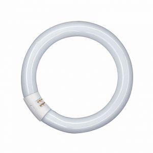 Anneau fluorescent Lumilux T9C G10q 22W 865