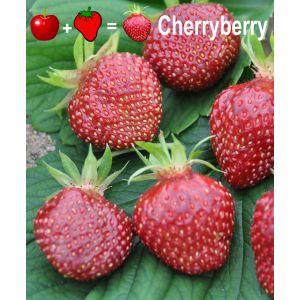 Fraise Cherryberry