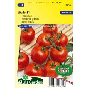 Tomate en grappes Vitador F1