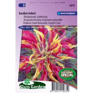Amarante (tricolore) comestible Garden Select