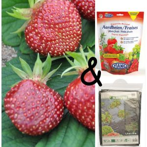 Paquet Fraise Cherryberry