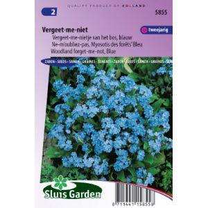 Ne-m'oubliez-pas, Myosotis de forêts Bleu