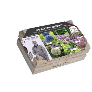 Allium Collection Boîte