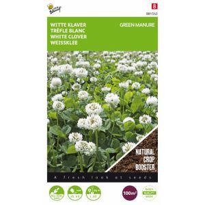 Fumage ou d'engrais vert Trèfle blanc / 100 gr - 100 m2
