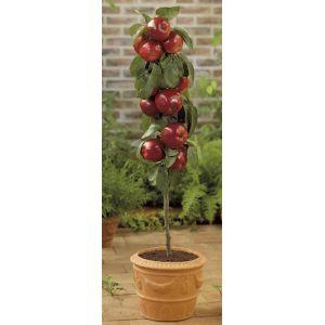Pomme de Gala
