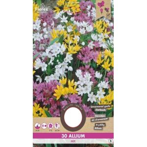 Allium en Mélange