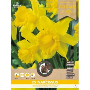 Narcisses Large Cupped Jaune