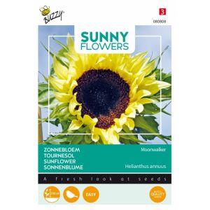 Tournesol - Sunny Flowers - Moonwalker
