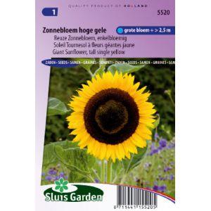 Soleil, Tournesol à fleurs géantes jaune