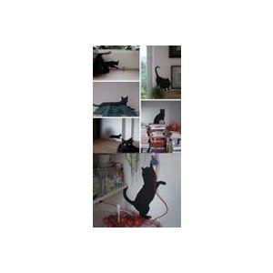 Sticker Guitou the Cat - Domestic noir en matière plastique