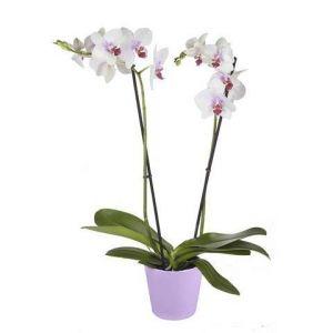 Nouveautés fleur en pot - Comparer les prix et acheter 0e297ec122d5