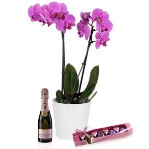 Le rêve d'une Maman: orquidée, chocolats et mini-champagne