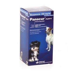Panacur Puppy