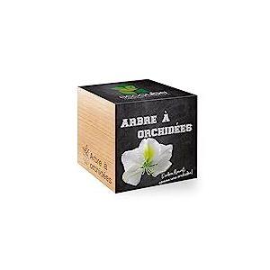 Feel Green Ecocube Arbre A? Orchide?es,  L'Arbre Fleurit Comme Une Orchidée, Idée Cadeau (100% Ecologique), Grow-Your-Own/Kit Prêt-à-Pousser, Plantes Dans Des Cubes En Bois 7.5cm, Produit En Autriche