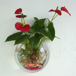Creative Suspension Acrylic Vase Plexiglass Wall Medium Aquarium Wall Hang Fish Tank