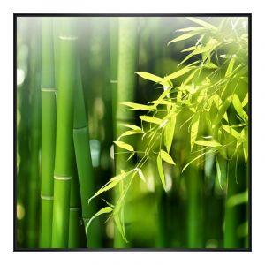 Photo de bambous Agrandir photo en Cadre photo plastique en noir carré en format 30 x 30 cm