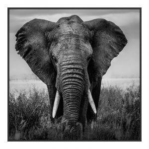 éléphant Image sur plexiglas en Cadre Artbox en noir en format 100 x 80 cm